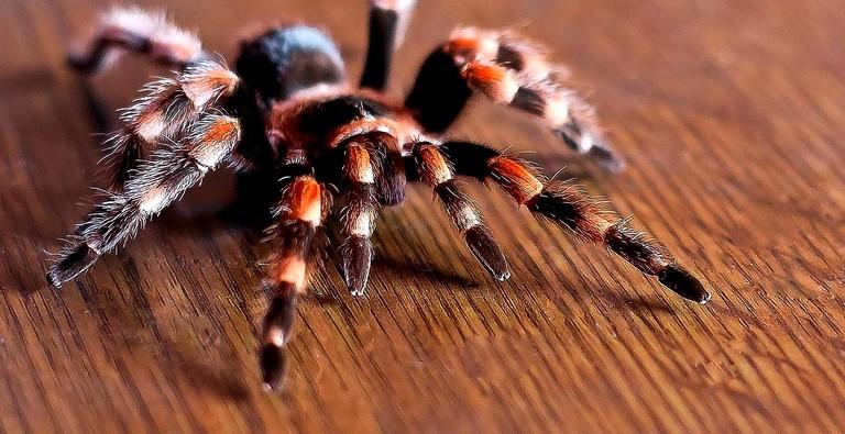 Боязнь пауков и животных