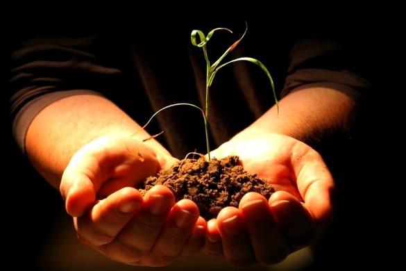 Что растения дают человеку и животным