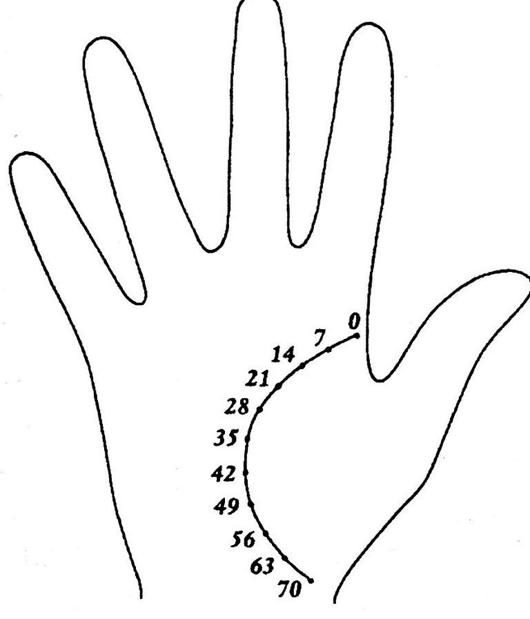 Картинка руки линии
