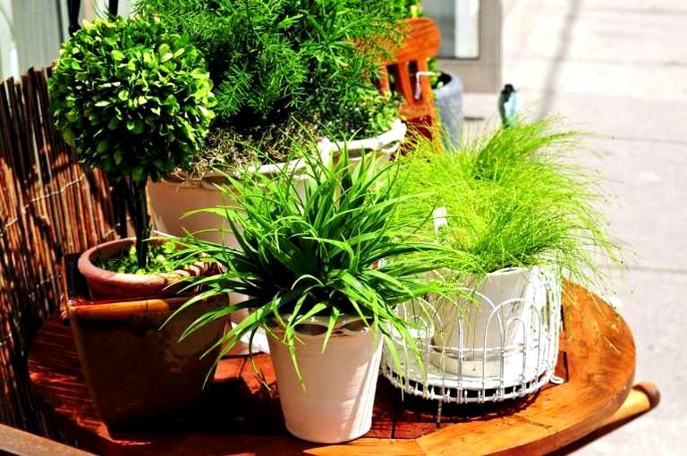 Практическая польза домашних растений