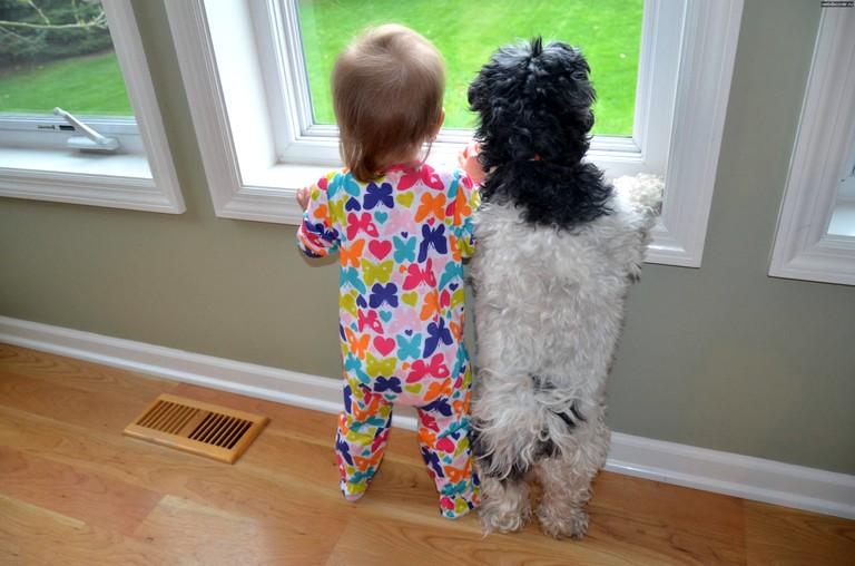 Животные для детей (2)
