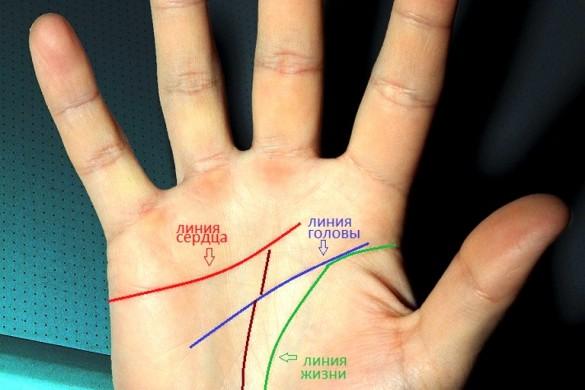 линии жизни на руке