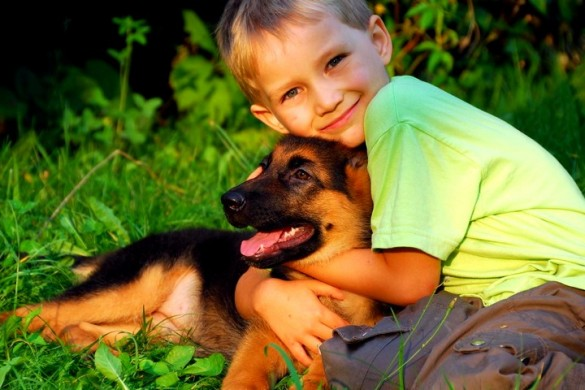 прогулки с животными